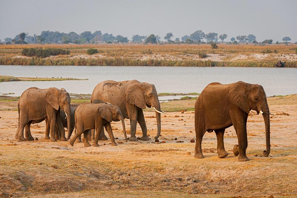 Elephants walking by a water source