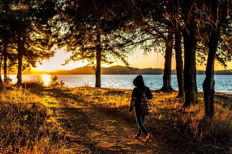 Walk in woods mental wellbeing